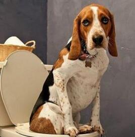 从狗狗拉稀与便便异常看疾病
