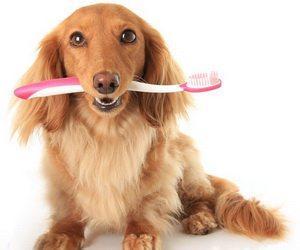 如何为狗狗清洁口腔
