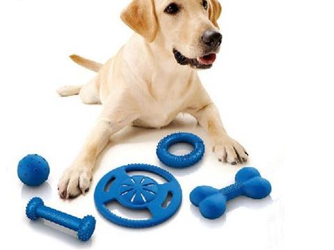 如何给狗狗挑选玩具