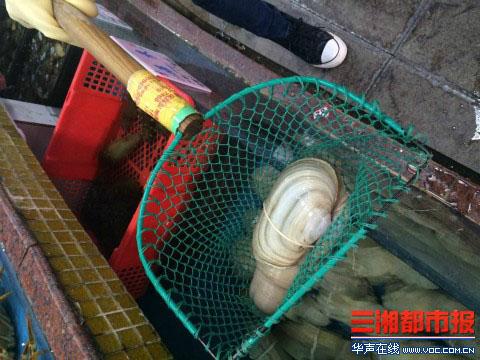 中午11点,长沙马王堆海鲜市场.