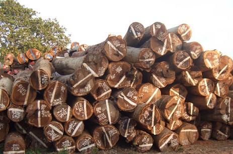 供应红木原木