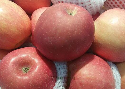 安塞山地苹果